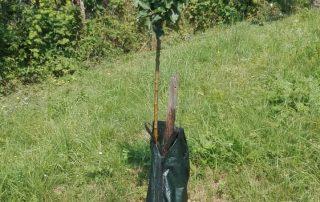 vodné vaky pre stromy, záhradník Košice