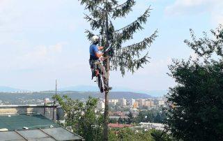 rizikový orez, záhradník Košice, rizikový výrub